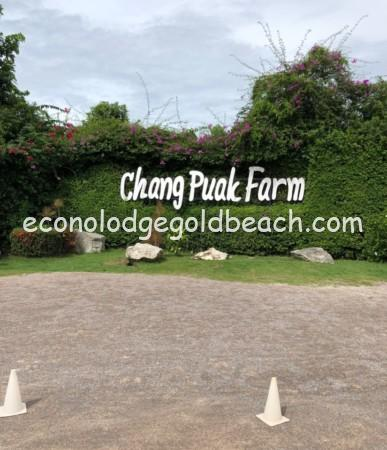 chang puak farm1